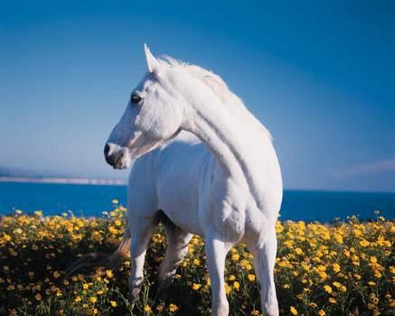 pferd und hund chinesisches horoskop